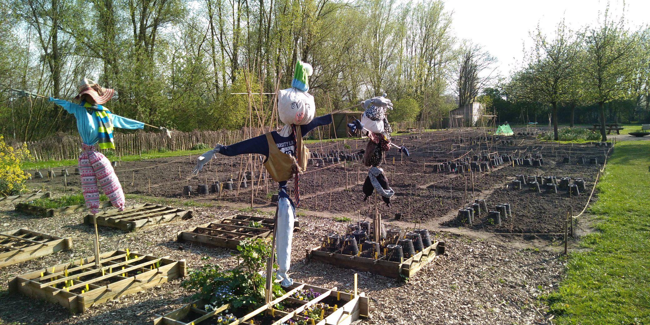 Samen biologische groenten telen in Utrecht