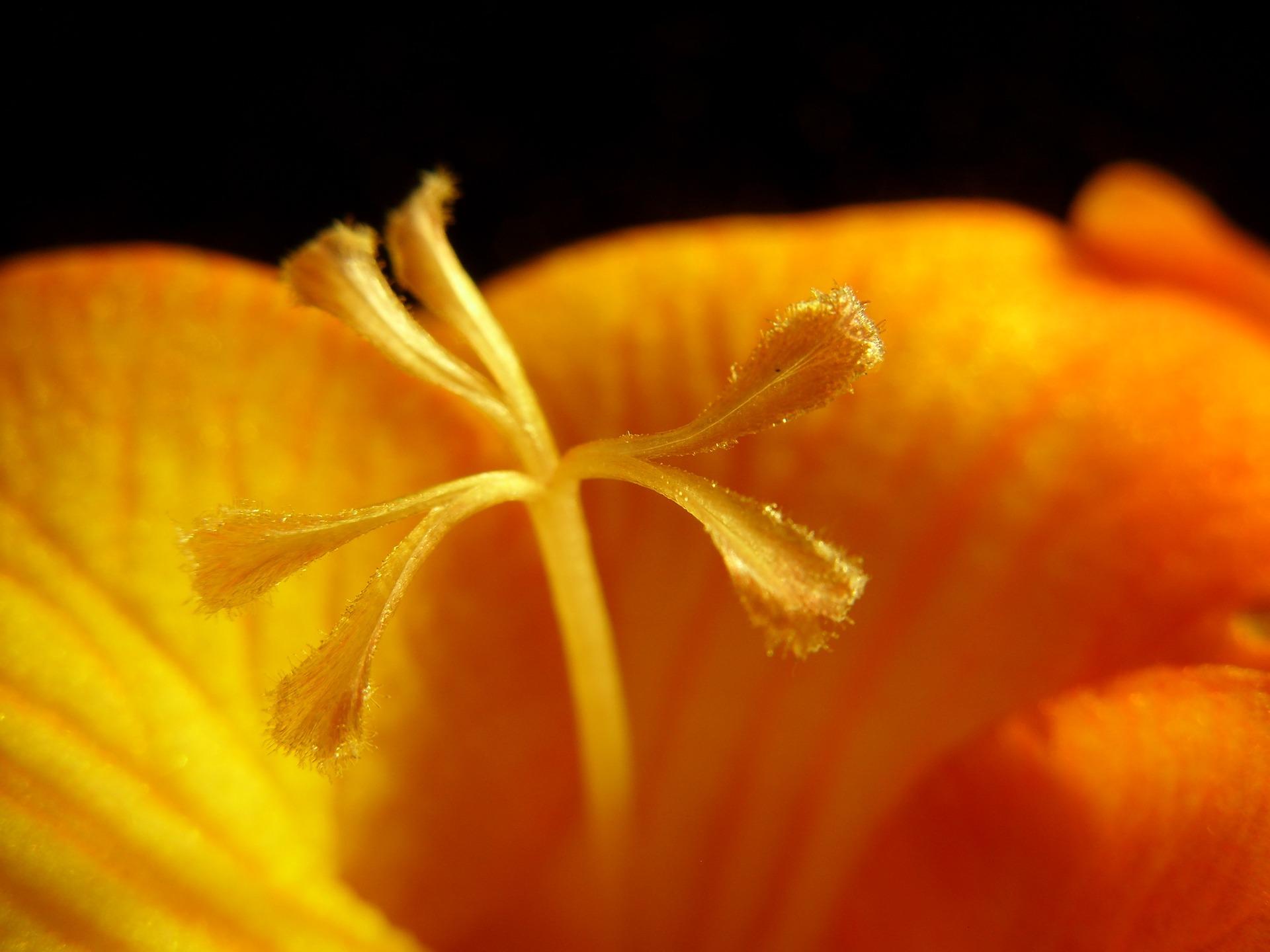 de Hitsigheid van bloemen